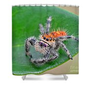 Regal Jumping Spider Shower Curtain