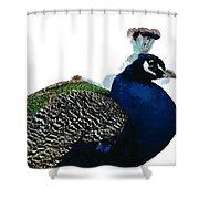 Regal Peacock Shower Curtain