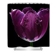 Regal Purple Shower Curtain