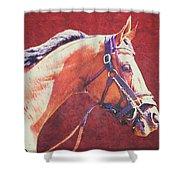 Regal Racehorse Shower Curtain