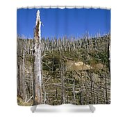 Regrowth Since Eruption Mt Saint Helens Shower Curtain