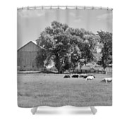 Reive Blvd Barn 15059b Shower Curtain