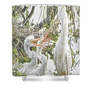 Rejecting Fledglings Shower Curtain