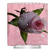 Rekindled Love Shower Curtain