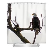 Relaxed Eagle Shower Curtain