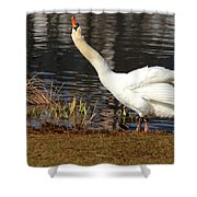 Relaxed Swan Shower Curtain