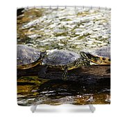 Relaxin' Turtles Shower Curtain