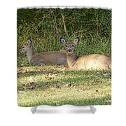 Relaxing In The Sun And Shade Shower Curtain
