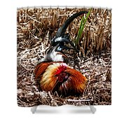 Relaxing Rooster Shower Curtain