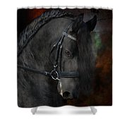 Rembrandt  Shower Curtain