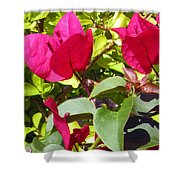 Remembering Magenta Shower Curtain