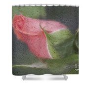 Rendition Of A Rose Shower Curtain