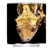 Reptile Close Up On Black Shower Curtain