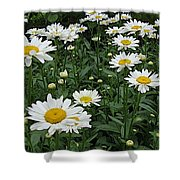 Requested Daisies Shower Curtain