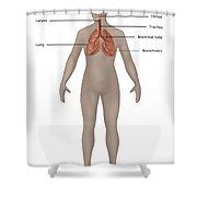 Respiratory System In Female Anatomy Shower Curtain