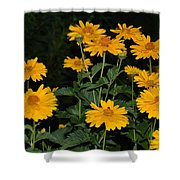 Resplendent Yellows Shower Curtain