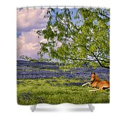 Resting Among The Bluebonnets Shower Curtain
