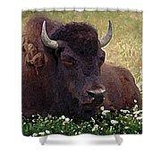 Resting Bison Shower Curtain