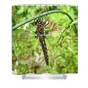 Resting Brown Dragonfly Shower Curtain