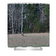 Resting Buck Shower Curtain
