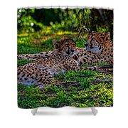 Resting Cheetahs Shower Curtain