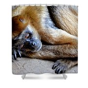 Resting Comfortably Shower Curtain