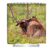 Resting Elk Shower Curtain