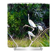 Resting Flock I Shower Curtain