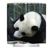 Resting Giant Panda Bear Shower Curtain