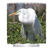 Resting Great Egret Shower Curtain