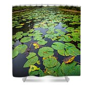 Resting Lilly Pads Shower Curtain