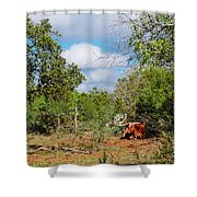 Resting Longhorn Bull - San Marcos Texas Hill Country Shower Curtain