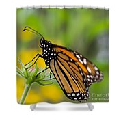 Resting Monarch Butterfly Shower Curtain