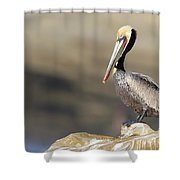 Resting Pelican Shower Curtain
