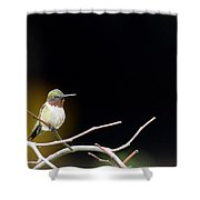 Resting Ruby Shower Curtain