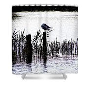 Resting Seagull  Shower Curtain