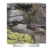 Resting Seal Shower Curtain