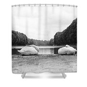 Resting Swans Shower Curtain