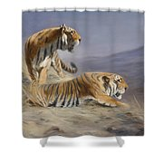 Resting Tigers Shower Curtain