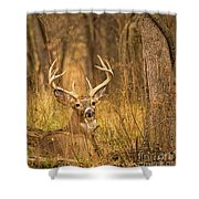 Resting White-tailed Deer Buck Shower Curtain