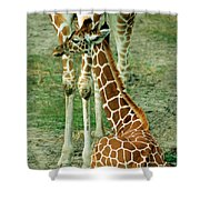 Reticulated Giraffe And Calf Shower Curtain