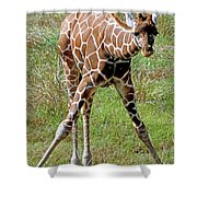 Reticulated Giraffe Shower Curtain