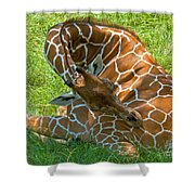 Reticulated Giraffe Sleeping Shower Curtain