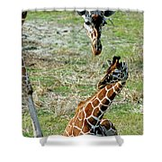 Reticulated Giraffe With Calf Shower Curtain