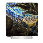 Reticulated Python With Rainbow Scales 2 Shower Curtain