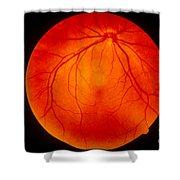 Retina Shower Curtain