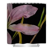 Retiring Lily Shower Curtain