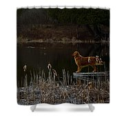 Retriever Focus Shower Curtain