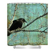 Retro Blue - Crow Shower Curtain
