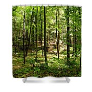 Wooded Path 13 Shower Curtain